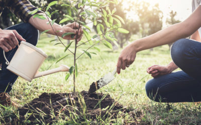 5 Good Trees to Plant in South Carolina