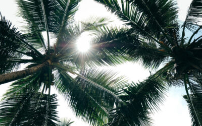 Which Types of Palm Trees Grow Best in South Carolina?